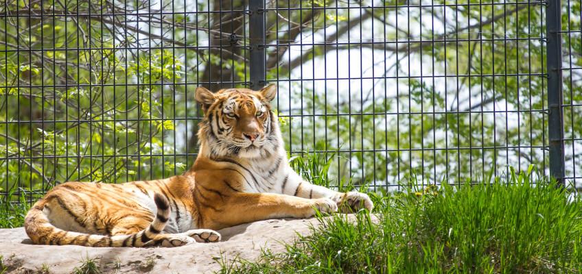 Tautphaus Zoo